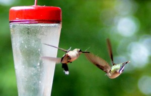 A couple of humming birds sparring around a feeder in Oologah, OK>
