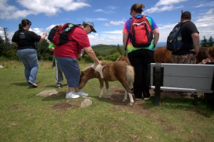 Although discouraged by park officials, visitors continue to have close up visits with horses.