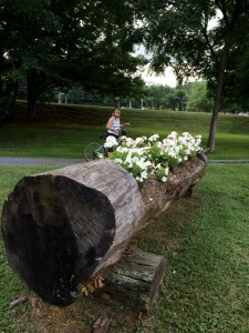 A huge tree is carved-out for a flower bed along the Creeper Trail.