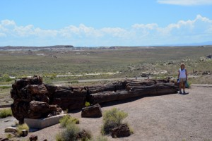 A huge petrified tree at the Visitors Center of Petrified Forest National Park.