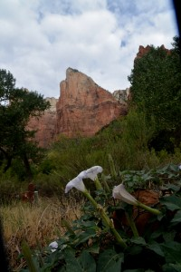 Early morning scene at Zion.