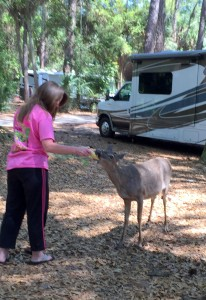 Deer frequent the park and take handouts from campers.