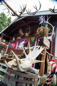 Several varieties of antlers available at this Talkeetna store.