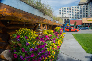 The downtown Anchorage Visitors Center was in full bloom when we visited .