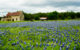 Following the bluebonnet trail in the Texas hill country.